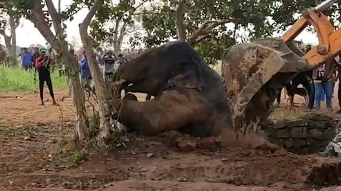 Bayi Gajah Terperosok ke Sumur Sedalam 25 Kaki, Warga Ramai-Ramai Lakukan Penyelamatan
