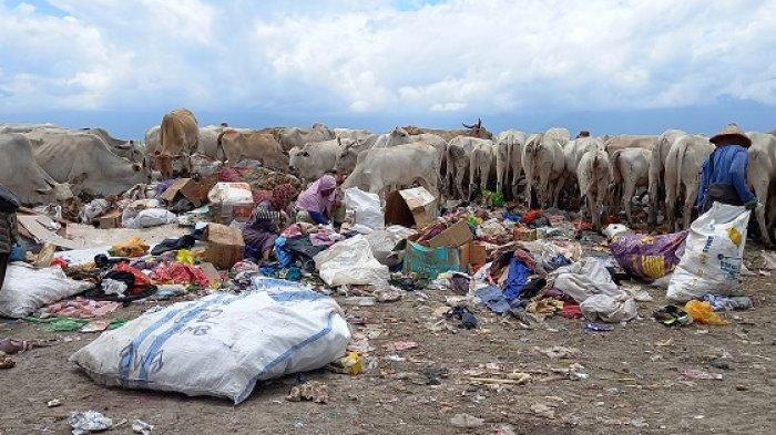 Rentan Terpapar Covid-19 Lewat Sampah Rumah Tangga, Begini Nasib Pemulung di TPA Kawatuna Palu