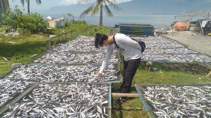 Omzet Produksi Ikan Asin di Mamboro Palu Bisa Capai Rp 400 Juta