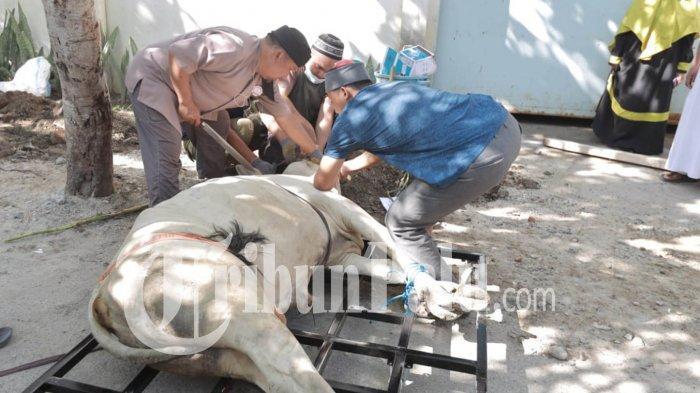 40 Hewan Kurban di Masjid Al-Munawwarah Palu Disembelih dengan Waktu 150 Menit