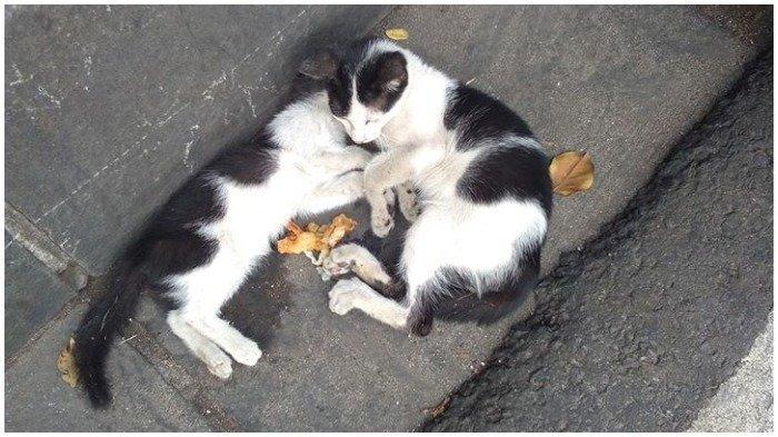 Viral Kisah Driver Ojol Temukan Kucing yang Temani dan Beri Makan Saudaranya yang Telah Mati