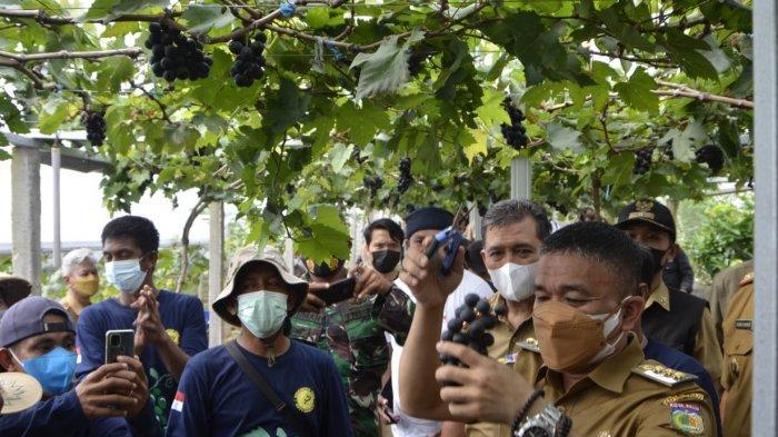 Strategi Wali Kota Hadianto Kembangkan Sektor Pertanian di Palu