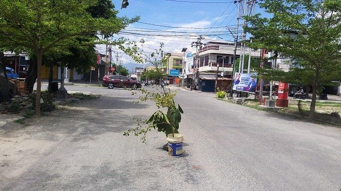 Kesal Sering Terjadi Kecelakaan, Warga Tanam Pohon di Lubang Jl Dr Wahidin Palu