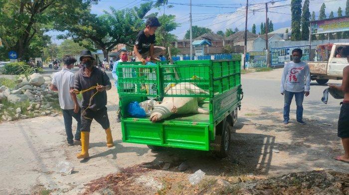Warga Temukan Ternak Sapi Mati di Pinggir Jl Dewi Sartika Palu