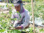anggota-kelompok-tatuna-tani-karya-mandiri-di-desa-kotarindau-kecamatan-dolo.jpg