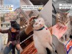 cari-kucing-liar-di-turki.jpg