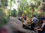 gajah-sumatra-ditemukan-tewas-dengan-luka-di-bagian-depan-kepala.jpg