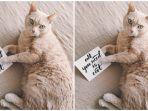 ilustrasi-kucing0-7.jpg