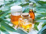 ilustrasi-minyak-eukaliptus-atau-eucalyptus-oil.jpg