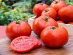 ilustrasi-tomat-tomat.jpg