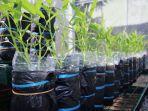 kangkung-hidroponik-sayuran-sederhana.jpg