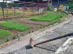 kondisi-stadion-mattoanging-makassar-yang-beralih-fungsi-jadi-kebun.jpg