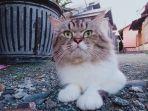 kucing-hilang-1.jpg