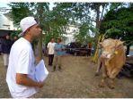 pembawa-acara-raffi-ahmad-menunjukkan-salah-satu-sapi-untuk-hewan-kurbannya-pada-idul-adha-tahun-ini.jpg