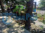 penebangan-pohon-rimbun-di-belakang-kantor-wali-kota-palu.jpg