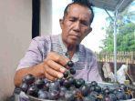 petani-anggur-di-jalan-anggur-iv-kelurahan-boyaoge-kecamatan-tatanga.jpg