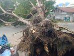 pohon-tumbang-jl-veteran-palu.jpg