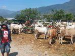 puluhan-ekor-sapi-tampak-sudah-disiapkan-pedagang-di-pusat-penjualan-ternak-sapi-2.jpg