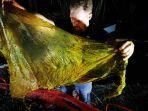 sebanyak-40-kg-sampah-ditemukan-di-perut-paus-muda-yang-mati-terdampar-di-filipina.jpg
