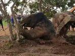 seekor-bayi-gajah-berusaha-keluar-dari-sumur.jpg