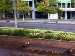seekor-kangguru-terlihat-melintasi-jalanan-di-kota-adelaide.jpg