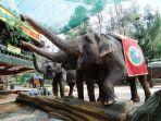 taman-safari-indonesia-di-kabupaten-bogor.jpg
