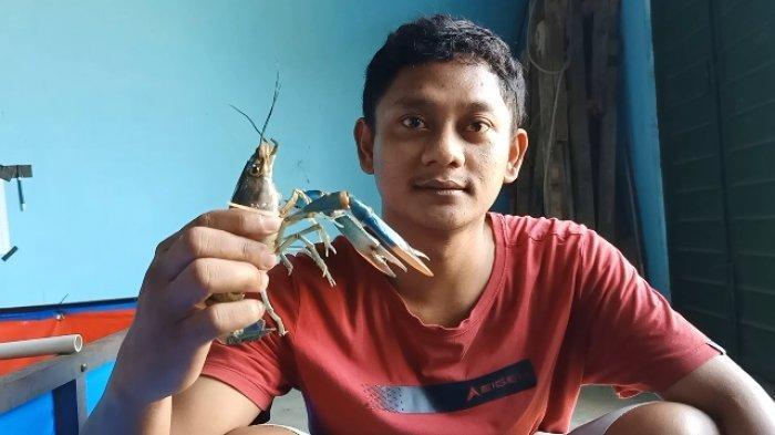 Bangkrut di Jakarta karena Pandemi, Budi Kini Sukses Budidaya Lobster di Kampung Halaman