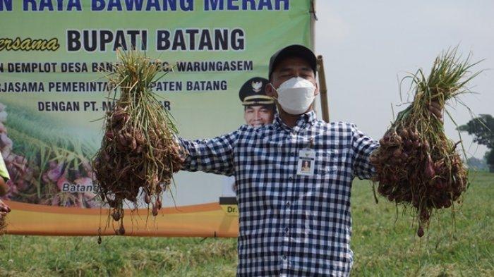 Pemkab Batang Berhasil Ubah Sawah Terdampak Tol Jadi Lahan Penghasil Bawang Merah