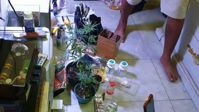 Nekat Tanam Ganja dalam Empat Pot di Rumah, Buruh Harian di Kramat Tegal Ditangkap Polisi