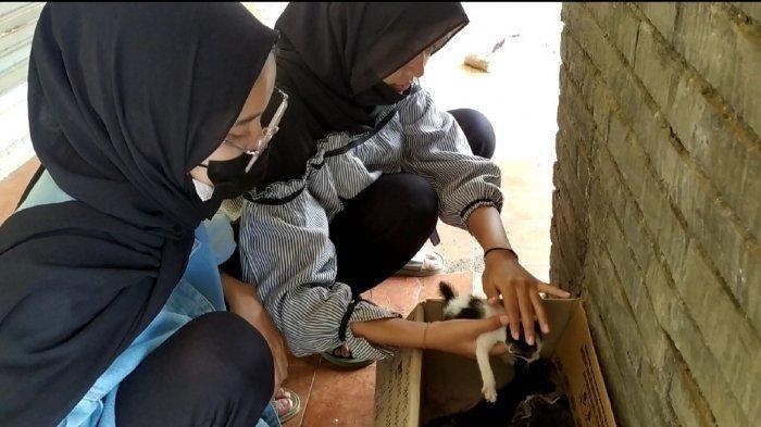 Dua Gadis di Pekalongan Luangkan Waktu Lebaran Beri Makan Kucing Liar di Kawasan Grosir Setono