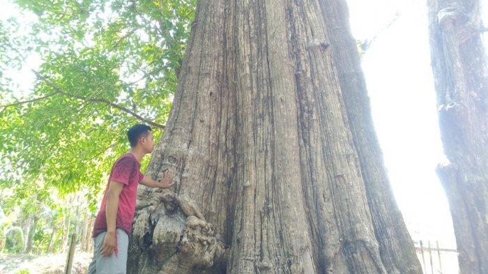Kisah Jati Denok di Hutan Blora Dikeramatkan Warga, Ada Legenda Putri Gumeng Tolak Lamaran Raja