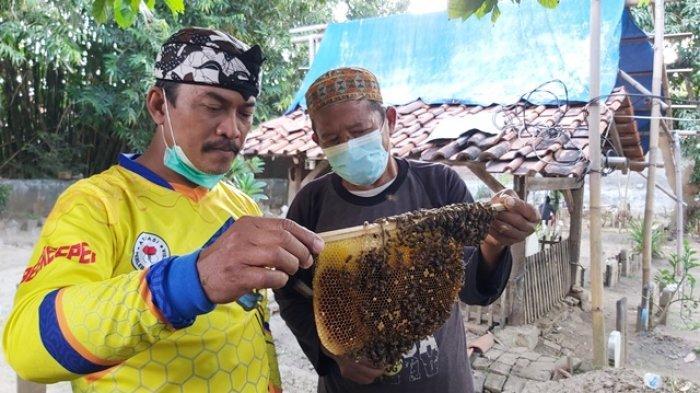 Penjaga Makam di Tegal Dilatih Manfaatkan Lahan Pemakaman Jadi Tempat Budidaya Lebah Klanceng
