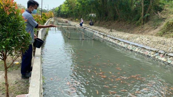 Kali Keruh di Kaligayam Disulap Jadi Tempat Budidaya Ikan, Potensi Wisata Baru di Kabupaten Tegal