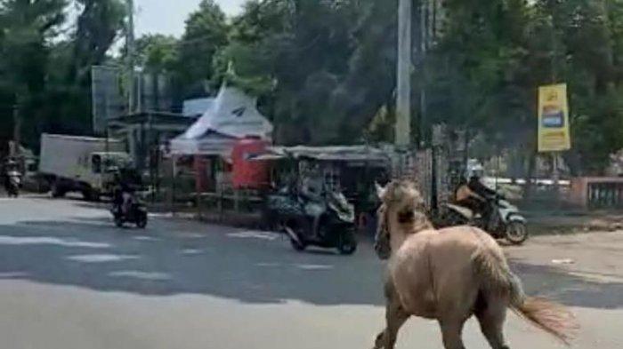 Warga Pekalongan Dihebohkan Seekor Kuda Berlari Bebas di Jalan Raya Keduwngwuni