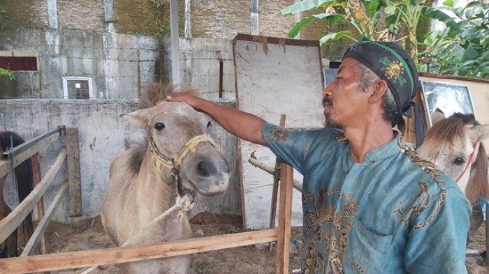 Tali Pengikat Lepas, Kuda Milik Rif'an Berlali Bebas di Jalan Umum Hebohkan Warga Pekalongan