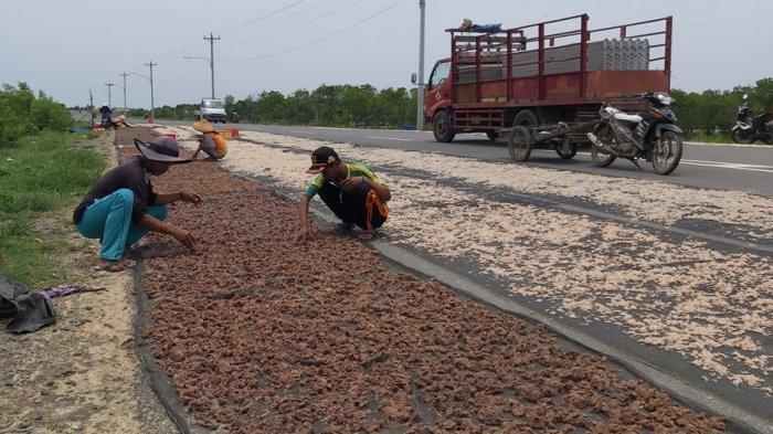 Ternyata Ini Alasan Nelayan Kota Tegal Rami-ramai Jemur Rebon di Jalan Lingkar Utara