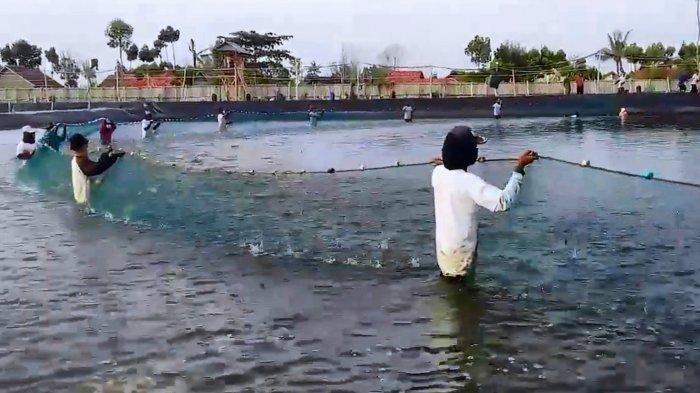 Pemkab Pemalang Serius Kembangkan Udang Vaname, Bupati Agung Akan Sasar Pasar Ekspor