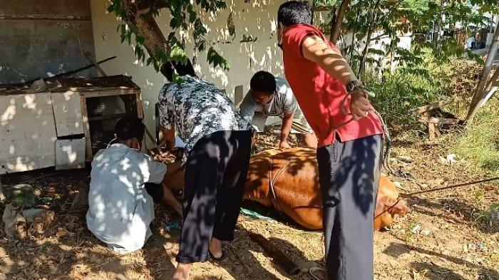 Jagal Hewan Kurban Laris Manis di Tengah Pandemi Covid-19