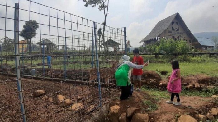 HTM Murah Meriah Rp2 Ribu, Ini Wahana Andalan Objek Wisata Sawah Batu di Kabupaten Tegal
