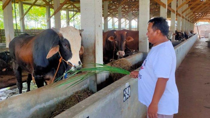 Sambut Pabrik Nestle, Dua Desa di Kabupaten Batang Jadi Percontohan Peternakan Sapi Perah