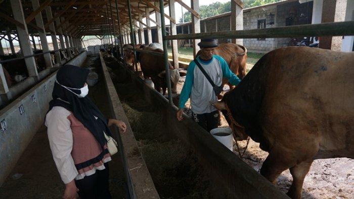 Penjualan Hewan Kurban di Kabupaten Batang Turun 60 Persen
