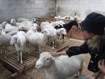 edufarming-peternakan-domba-petungkriyono-kabupaten-pekalongan.jpg
