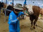 eternak-sapi-pasar-hewan-ternak-randudongkal-pemalang.jpg