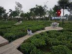 pengunjung-sedang-berswafoto-di-beberapa-spot-foto-taman-kebun-teh-patitie-desa.jpg