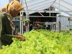 sayuran-hidroponik-kabupaten-tegal.jpg