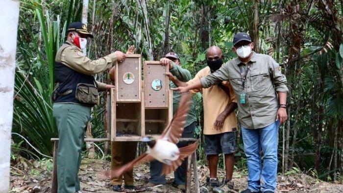 Soal Mahkota Cenderawasih di PON XX 2021, Ini Kata BBKSDA Papua