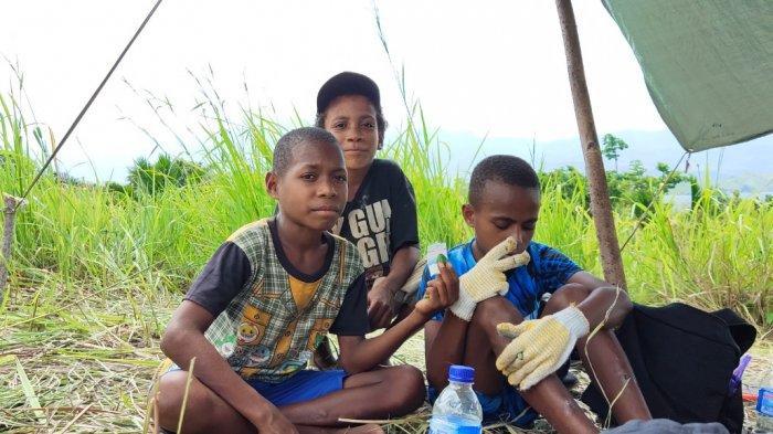 Cerita Lucu Anak Papua Makan Pinang Sejak Kelas 1 SD