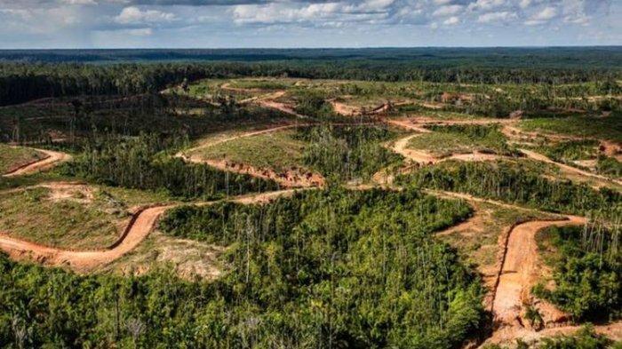 Korindo, Perusahaan Kelapa Sawit dan Kayu dikeluarkan dari Forest Stewardship Council