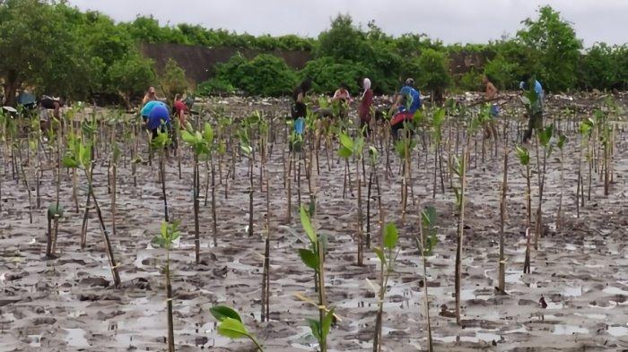 RESTORASI - Ekosistem mangrove di Provinsi Papua Barat.