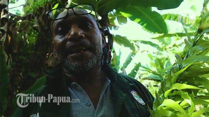 Charles Toto: Keladi, Petatas, dan Pisang Bisa Menjadi Produk Unggulan Papua